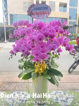 Chậu hoa lan hồ điệp 14 cây màu hồng