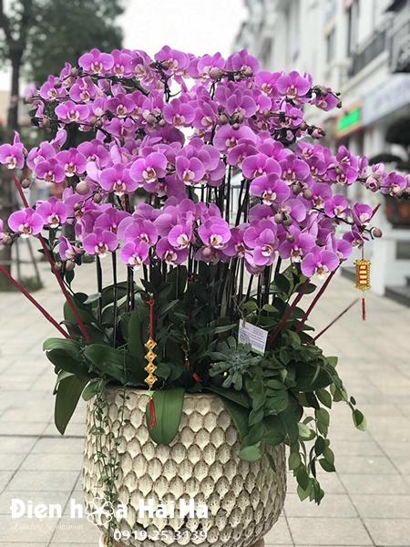 sinh nhật chồng nên tặng hoa gì