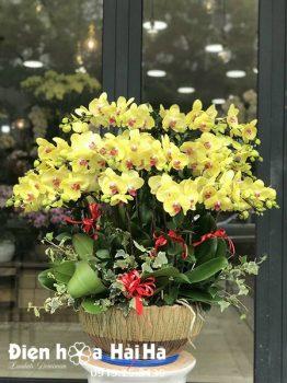 Chậu hoa lan hồ điệp 25 cây màu vàng