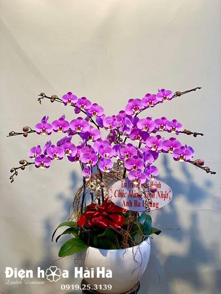 Chậu hoa lan hồ điệp 9 cây màu tím