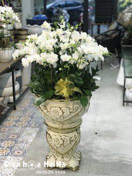 Chậu hoa lan hồ điệp mini màu trắng 30 cây