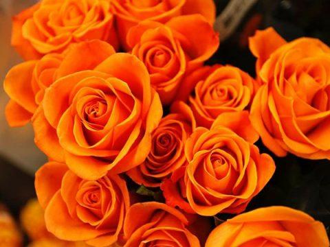 Ý nghĩa hoa hồng cam – Đam mê rực cháy