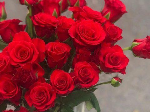 Sinh nhật mẹ nên tặng hoa gì? +9 loại hoa cảm động