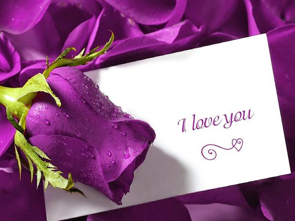 Ý nghĩa hoa hồng tím về tình yêu đôi lứa lãng mạn