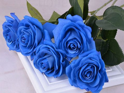 Ý nghĩa hoa hồng xanh – Tình yêu bất diệt có tồn tại?