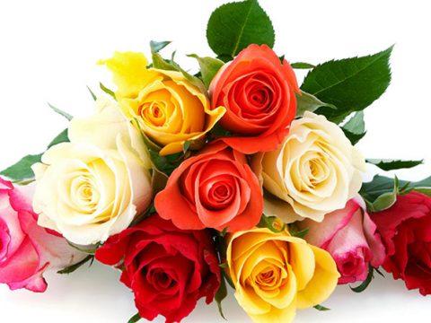 Ý nghĩa số lượng hoa hồng từ 1- 1001